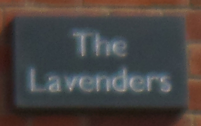 the Lavenders